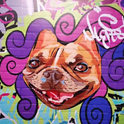 Commercial Space To Rent - Dog Related Business Southport Gold Coast City Preview