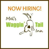 Pet Care Attendant - Mel's wagginTail Inn