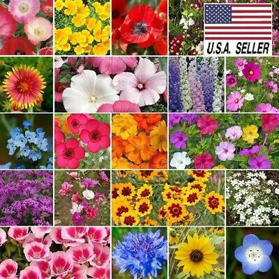 300++ Seeds ALL ANNUAL WILDFLOWER MIX 20 Species of Wildflower USA_Same_day_Ship Annual Wildflower Seed Mix