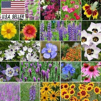 300++ SEEDS NORTH AMERICAN NATIVE WILDFLOWER SEED MIX 19 Species of Wildflower !