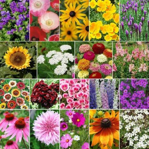 LATE BLOOMER Fall Bloom Wildflowers 19 Flower Species Heirloom Non-GMO 300 Seeds