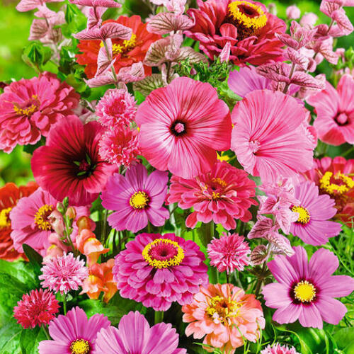 PINK PERFECTION Flower Mix Heirloom Flowers Pollinators Non-GMO 1gr 150 Seeds