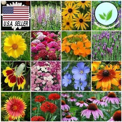 500++ Seeds ALL PERENNIAL WILDFLOWER MIX 15 Different Flower  Butterflies Garden
