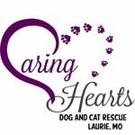 caringheartsdogandcatrescue