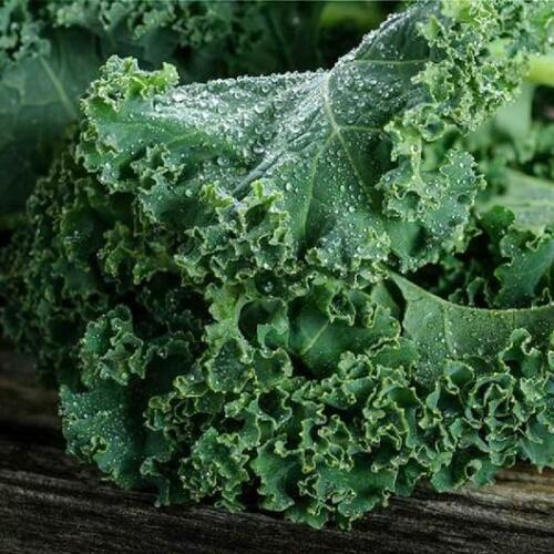 1,000 Kale Dwarf Blue Curled Scotch Kale Seeds - Non-GMO Heirloom  Free Shipping