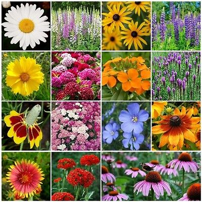 All Perennial Wildflower Mix, 15 Species Flowers, Variety Sizes, Easy (Grow Wildflowers)