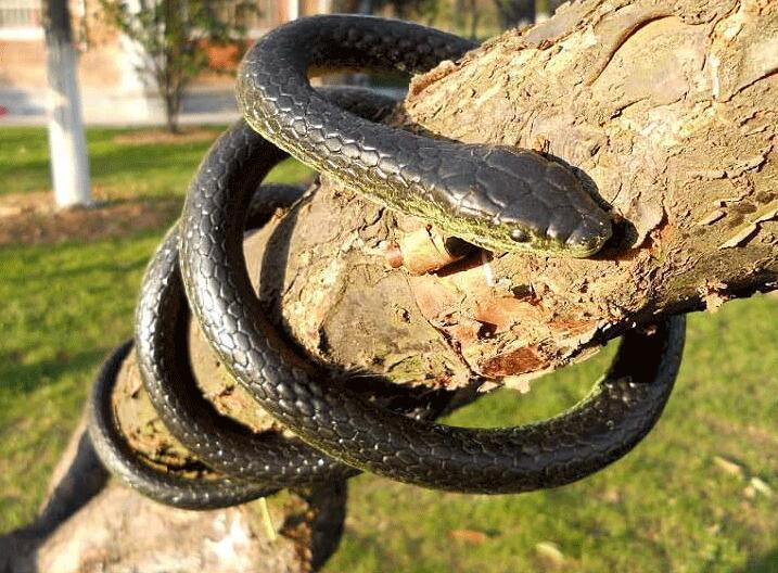 1Pc 130cm lifelike Realistic Soft Rubber Snake Scary Funny Joke Prank Toy Snake