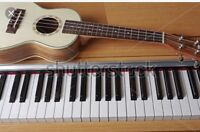 All kind guitar and piano lesson