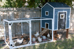 Wanted: Looking for chicken coop, run, etc. For ex battery hens!