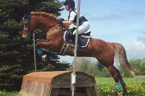 Maplegrove Equestrian Centre - Boarding Lessons Training