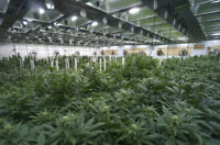 Micro cultivation contract - skilled producers wanted