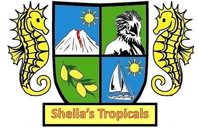 Sheila s Tropicals