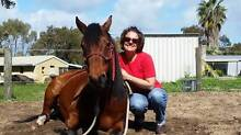 'Shorty' Bay QH Gelding – 9 years – approx. 14.1 hh - Unreg. Secret Harbour Rockingham Area Preview