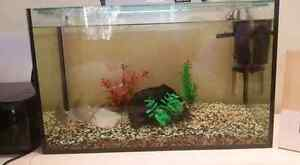 60 L second fish tank. Practically new Petrie Pine Rivers Area Preview
