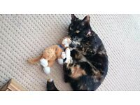 Tortoiseshell cat lost in Bowthorpe