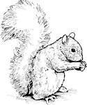 The Gray Squirrel Shop