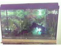 Fish tank 100 litre
