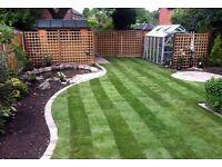 Hedge treee and garden work