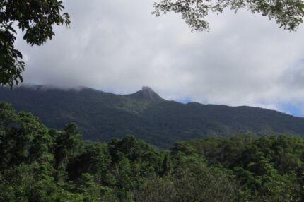 Beautiful Daintree Rainforest Land for Sale !!