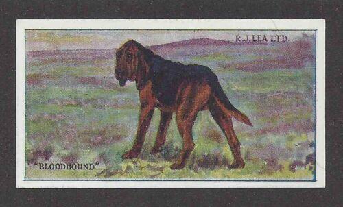 Rare 1923 UK Dog Art Full Body RJ Lea Chairman Cigarette Card BLOODHOUND