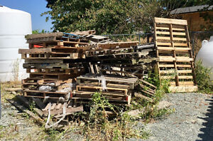 Free Pallets - LOTS and LOTS