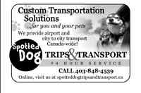 Custom Transportation Solutions for You and Your Pet