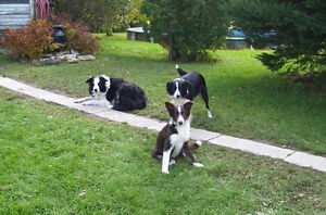 """""""Pets First Sitting Services"""" Putting your pets first since '09! Cornwall Ontario image 3"""