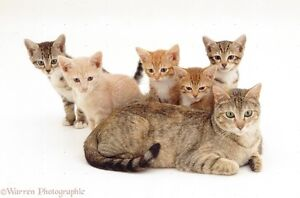 Cats/Kittens sitter at our home for $5/day