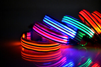Patriotic Pinstriped Pet Dog Collar Led Glow In The Dark 6 Colors 4 Flash Modes