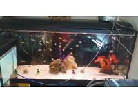 4 foot fish tank and 3 foot tank