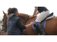 Freelance Horse Riding Instructor/Coach