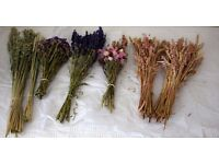 Dried grasses, seeds and flowers - varied selection