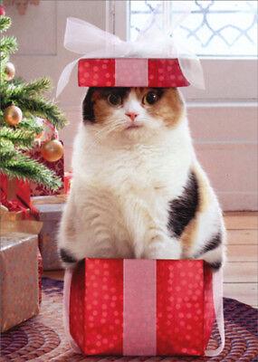 Cat In Small Box Box of 10 Funny  Humorous Avanti Christmas