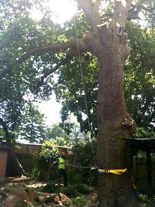 PROFESSIONAL, TREE CARE SERVICES-$$ REASONABLE RATES $$ Oakville / Halton Region Toronto (GTA) image 2