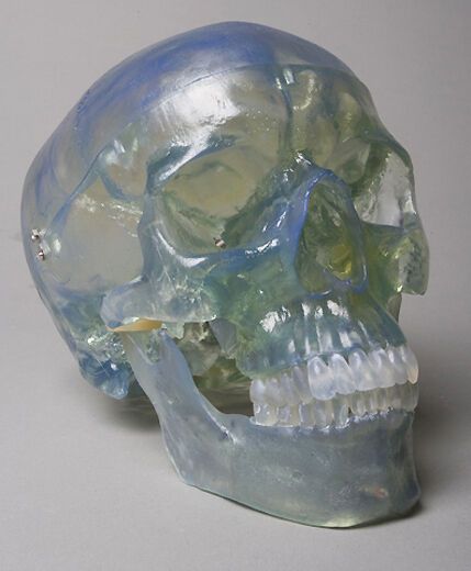 Clear Life-Size Human Skull, Halloween Horror Prop, Skulls NEW