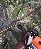 Tree Service Specializing in jobs Jobs under $500