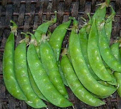 50 Snow Pea Seeds Dwarf Sugar Grey Seeds Garden Seeds Snow Pea Seeds