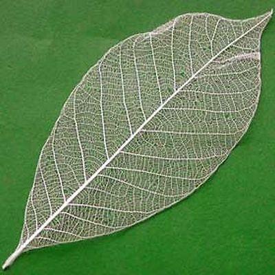 """Lot  10 grandes feuilles """"squelette"""" NATUREL"""