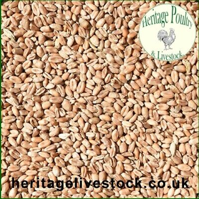 20kg Heritage Cleaned Whole Wheat - straight feed for waterfowl & poultry