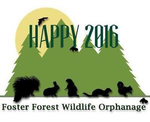 2016 FOSTER FOREST WILDLIFE ORPHANAGE WISH LIST