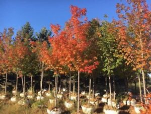 Trees , Shrubs , Landscaping , Planting & Delivery!