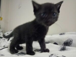 Giveaway kittens/cats