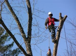 woody's tree trimming cutting down removal service