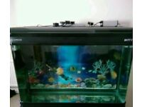 """FISH TANK AND HOOD 250L 43"""" x 17"""" x 29 + EXTRAS CLEAN READY TO GO"""
