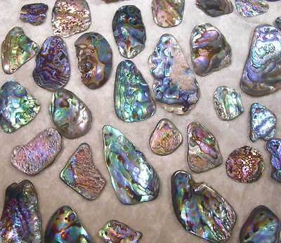 Used, BWT- 6pcs Medium Top Drilled New Zealand Paua/Abalone Shells- Jewelry- Scrapbook for sale  Corpus Christi