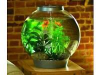 Biorb 60l aquarium