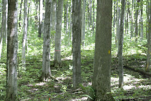 Forest Management & Tree Marking London Ontario image 1