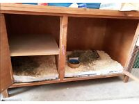 2 Male Guinea Pigs with outdoor and indoor hutch