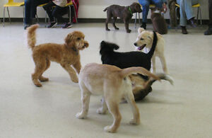 FREE PUPPY PARTY Peterborough Peterborough Area image 2