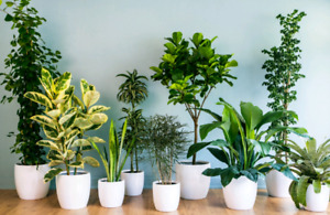 I pick up unwanted house plants.
